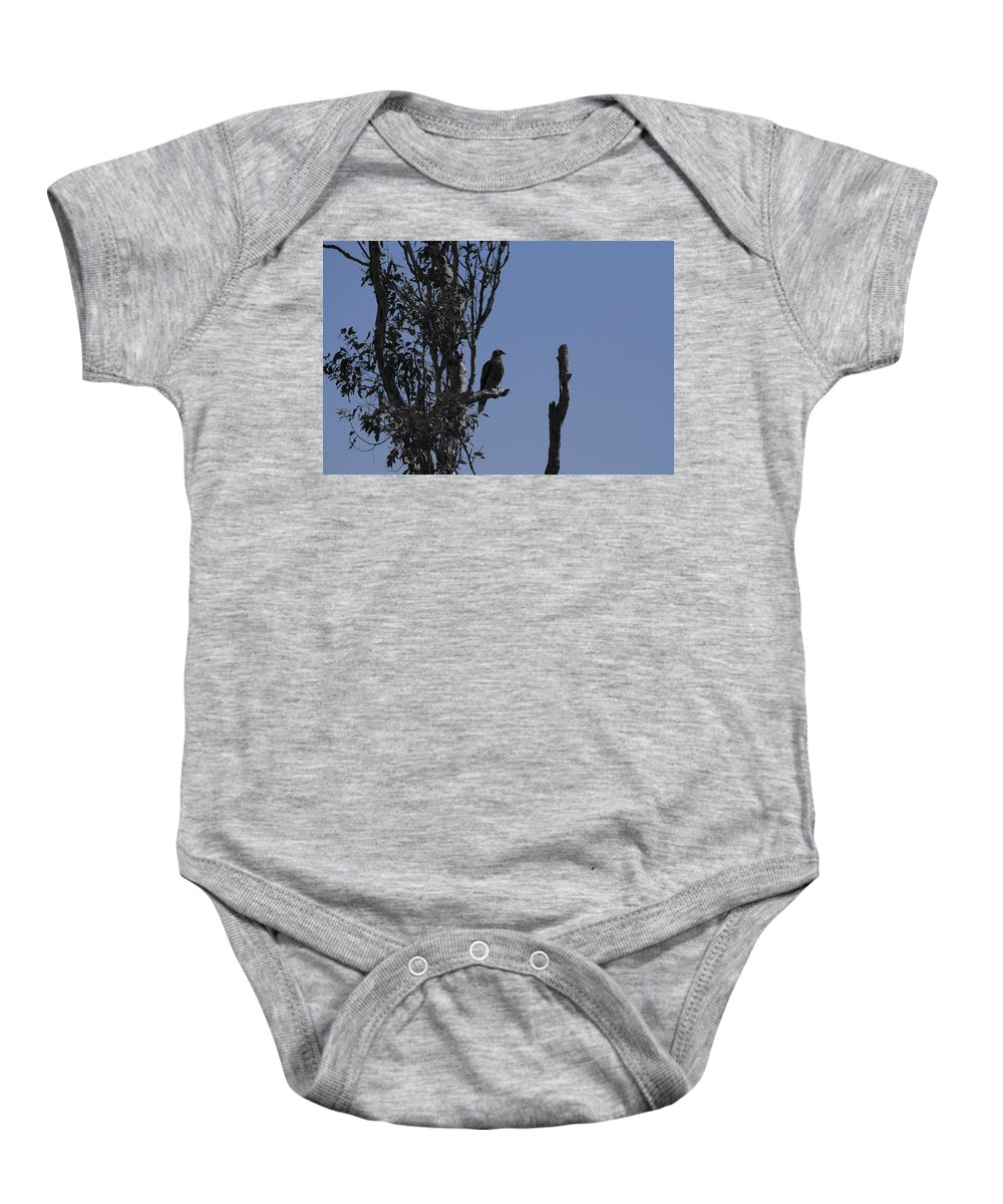 Whistling Kite Baby Onesie featuring the photograph Blue Gray by Douglas Barnard