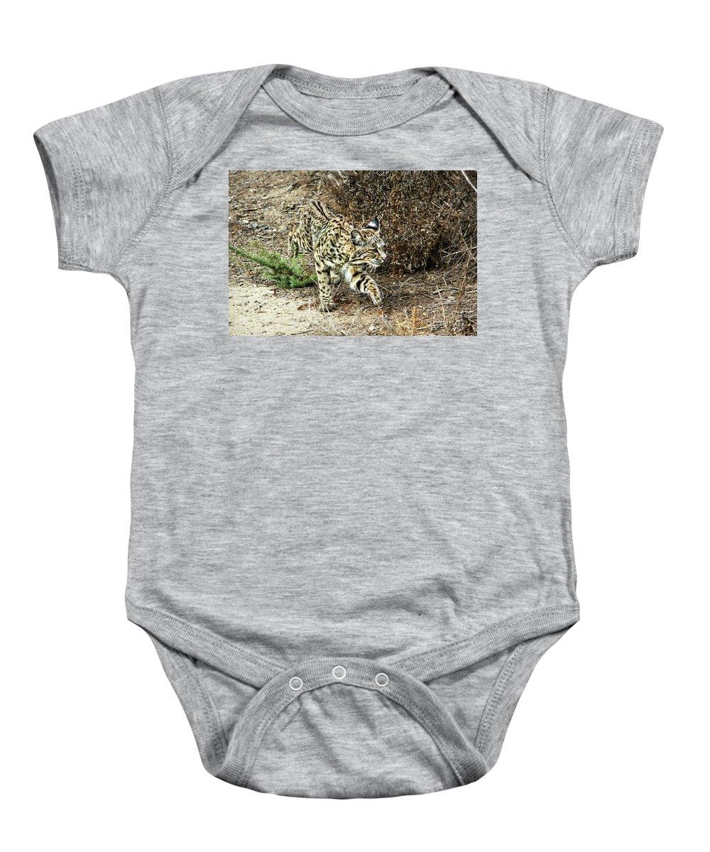 Bobcat Baby Onesie featuring the photograph Bobcat Stalking Prey by Mariola Bitner