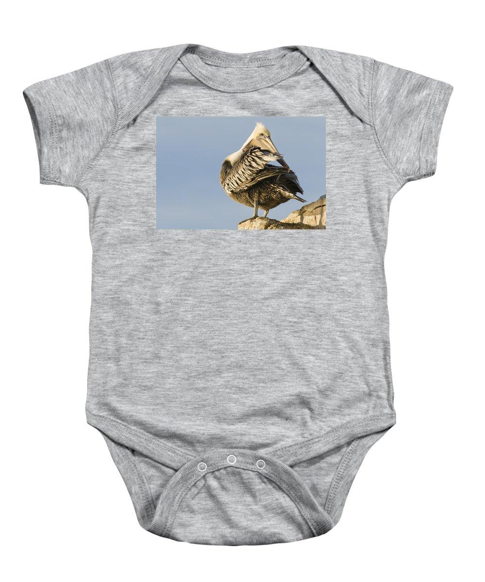 00429648 Baby Onesie featuring the photograph Brown Pelican Preening Natural Bridges by Sebastian Kennerknecht