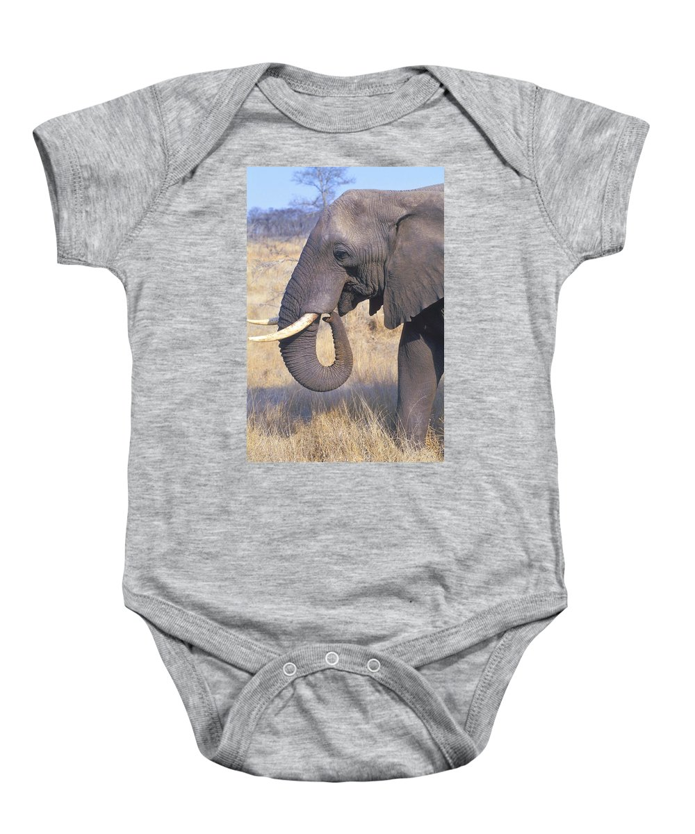 Animal Baby Onesie featuring the photograph Bull Elephant by John Pitcher
