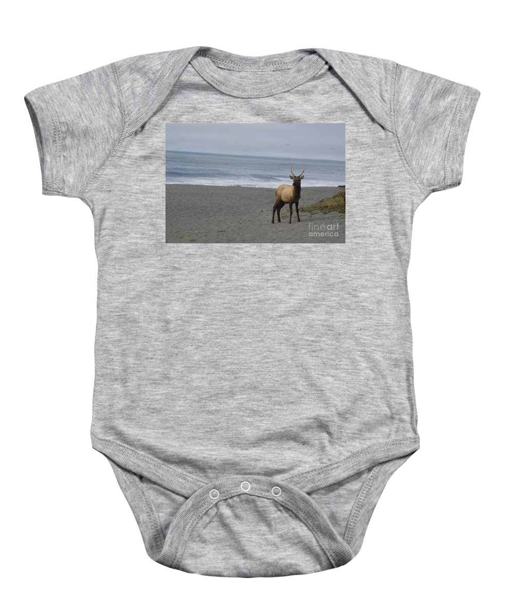 Bull Baby Onesie featuring the photograph Bull Elk On Calfornia Coast by Jim And Emily Bush