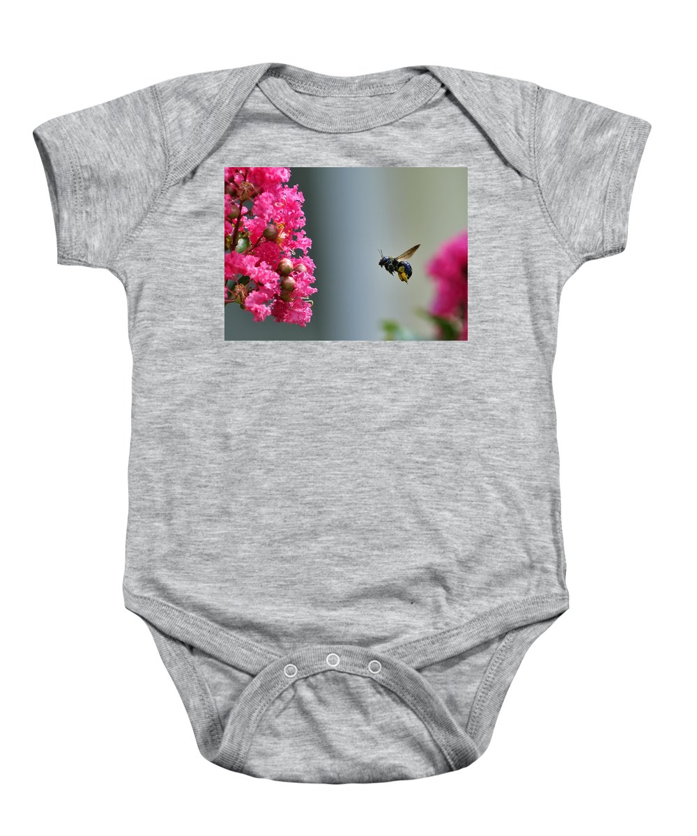 Bee Baby Onesie featuring the photograph Carpenter Bee At Work by Bill Dodsworth