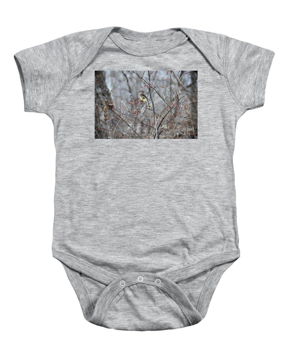Bird Baby Onesie featuring the photograph Cedar Wax Wing 3 by David Arment