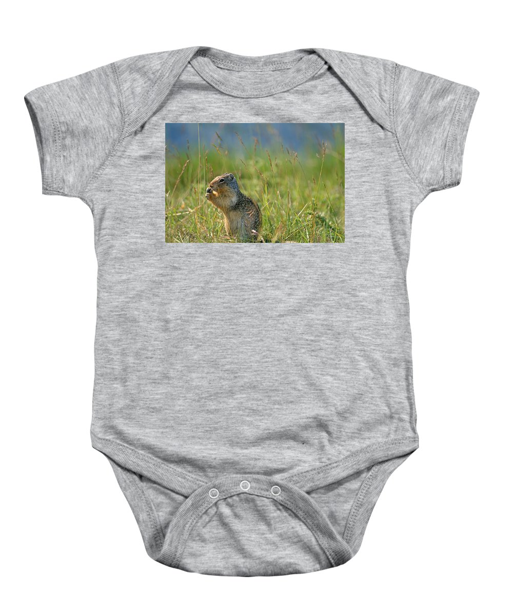 Banff National Park Baby Onesie featuring the photograph Columbia Ground Squirrel Feeding by Mike Grandmailson