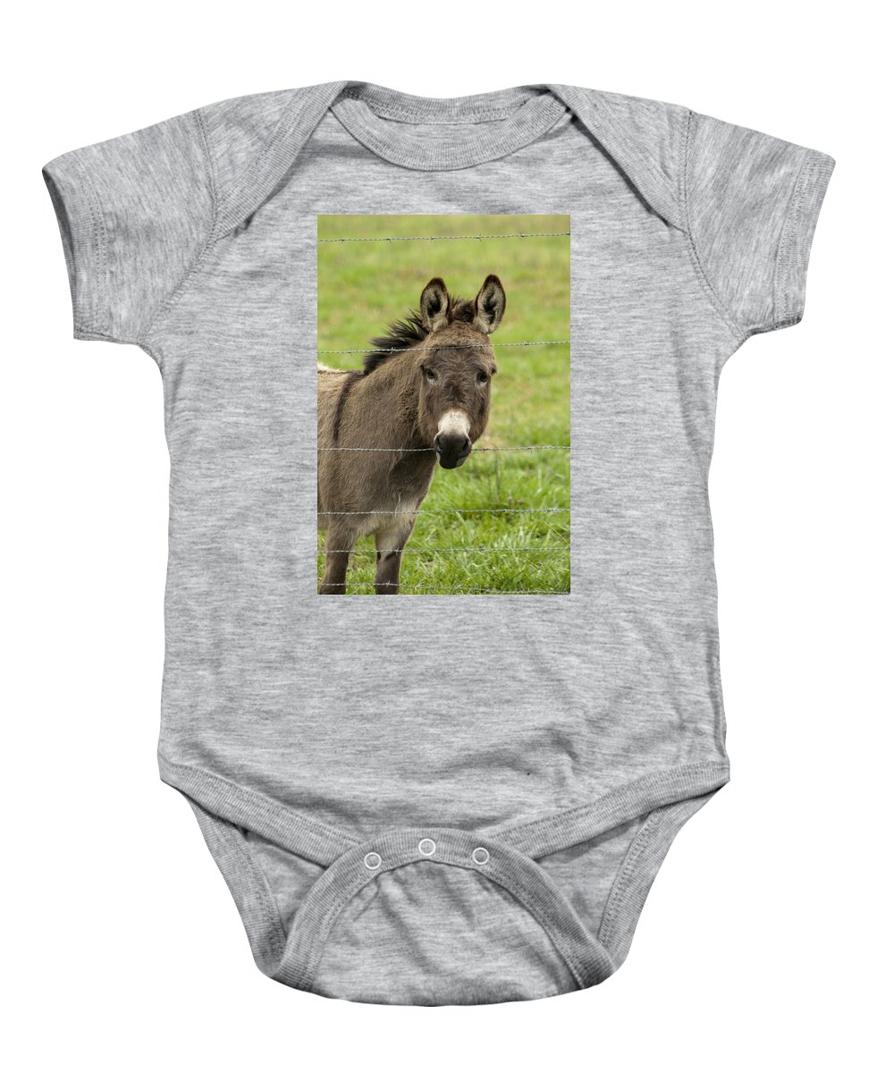 Donkey Baby Onesie featuring the photograph Donkey - The Beast Of Burden by Kathy Clark