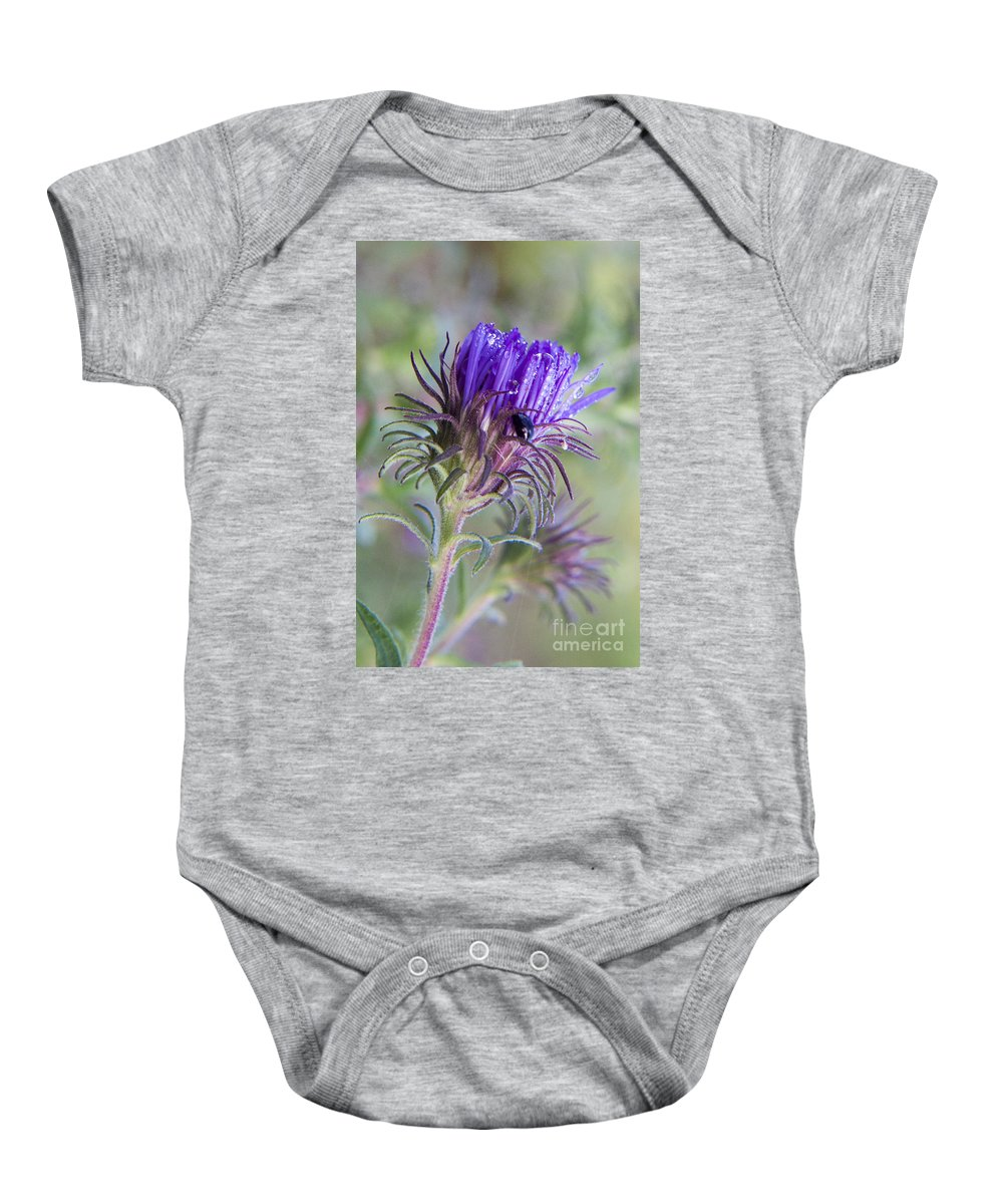 Knapweed Baby Onesie featuring the photograph Early Knapweed by Darleen Stry