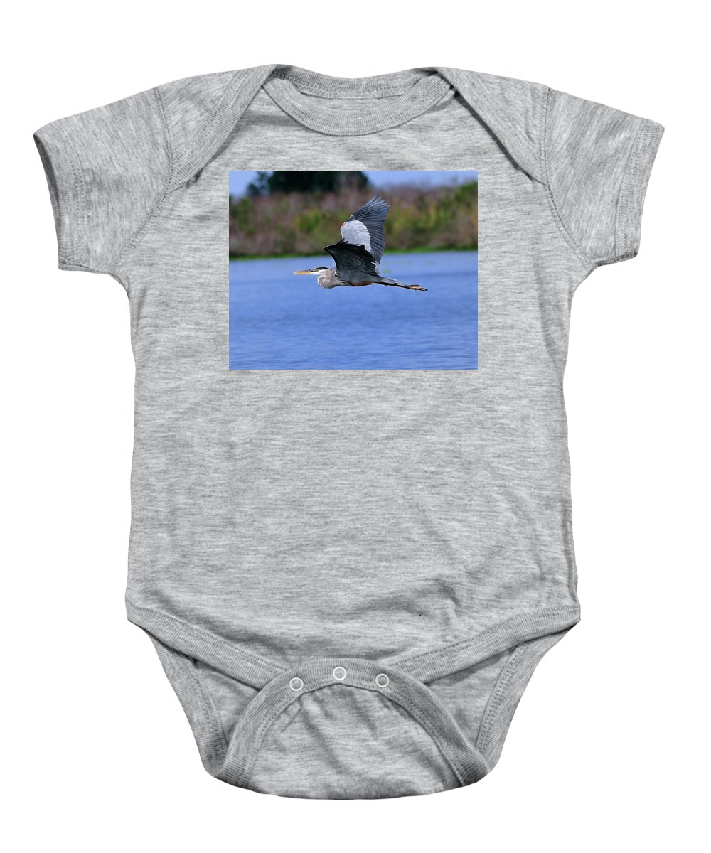 Great Baby Onesie featuring the photograph Great Blue Inflight by Bill Dodsworth