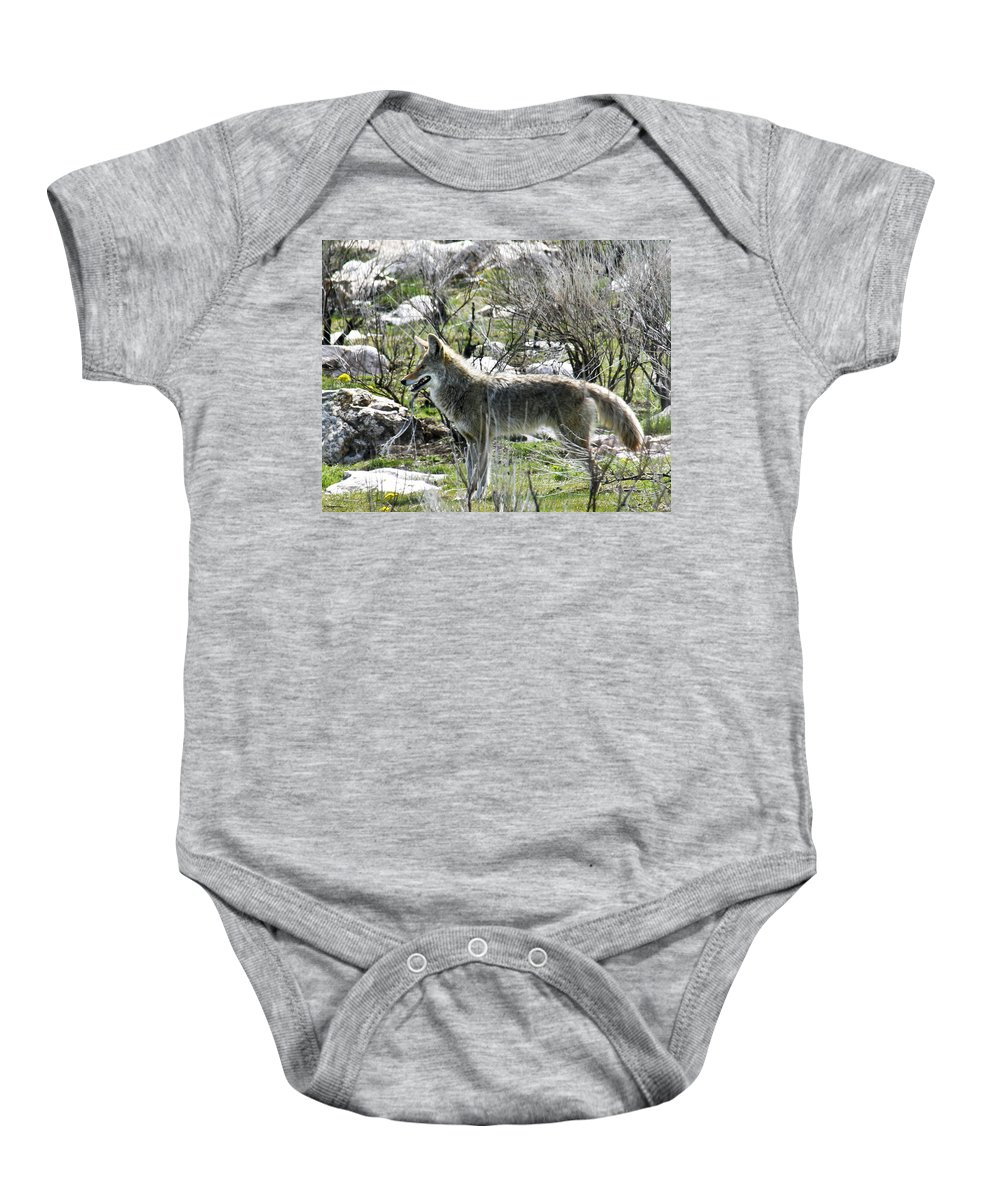 Grey Baby Onesie featuring the photograph grey Fox 2 by Marilyn Hunt