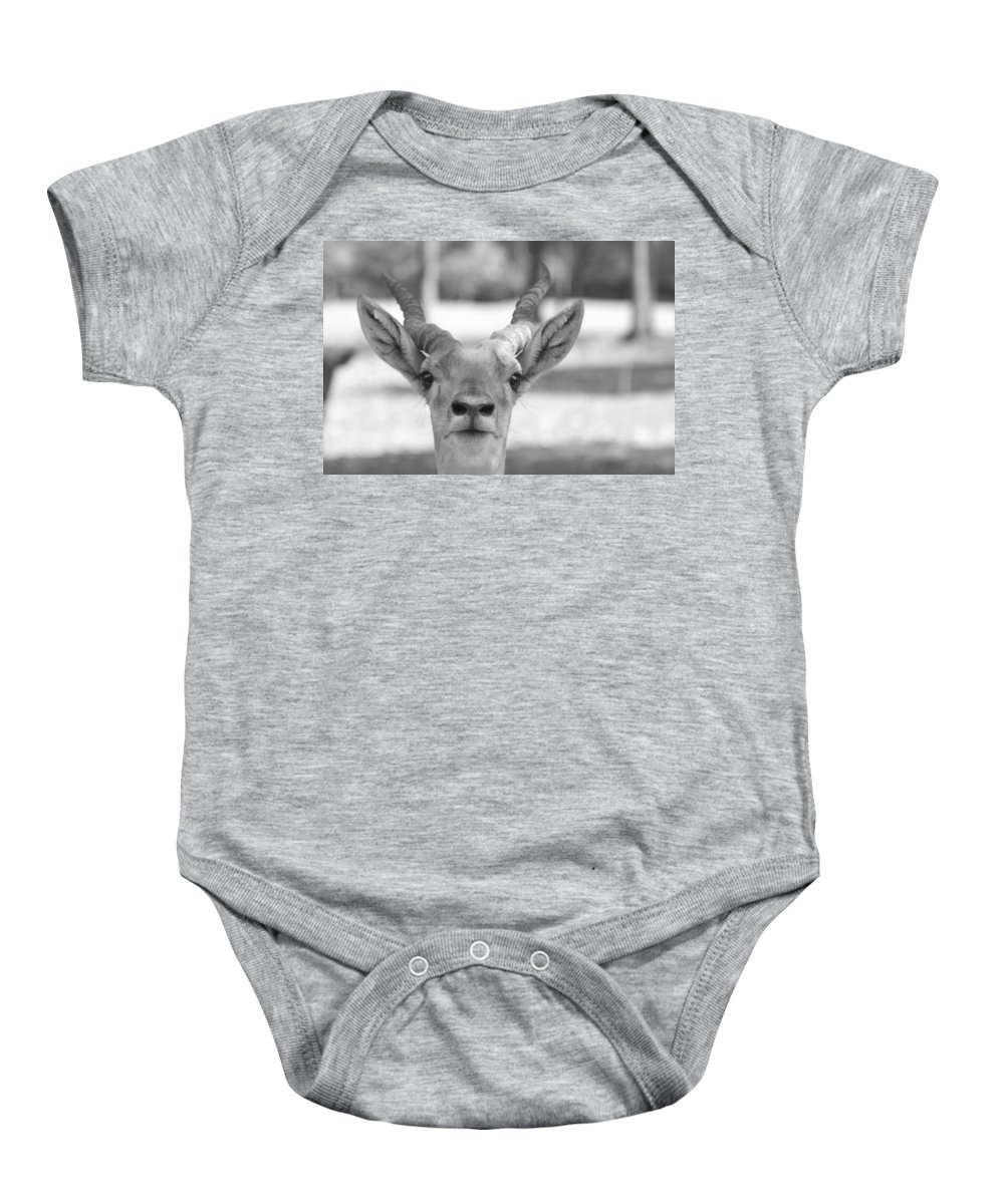 Impala Baby Onesie featuring the photograph Impala -black And White by Douglas Barnard