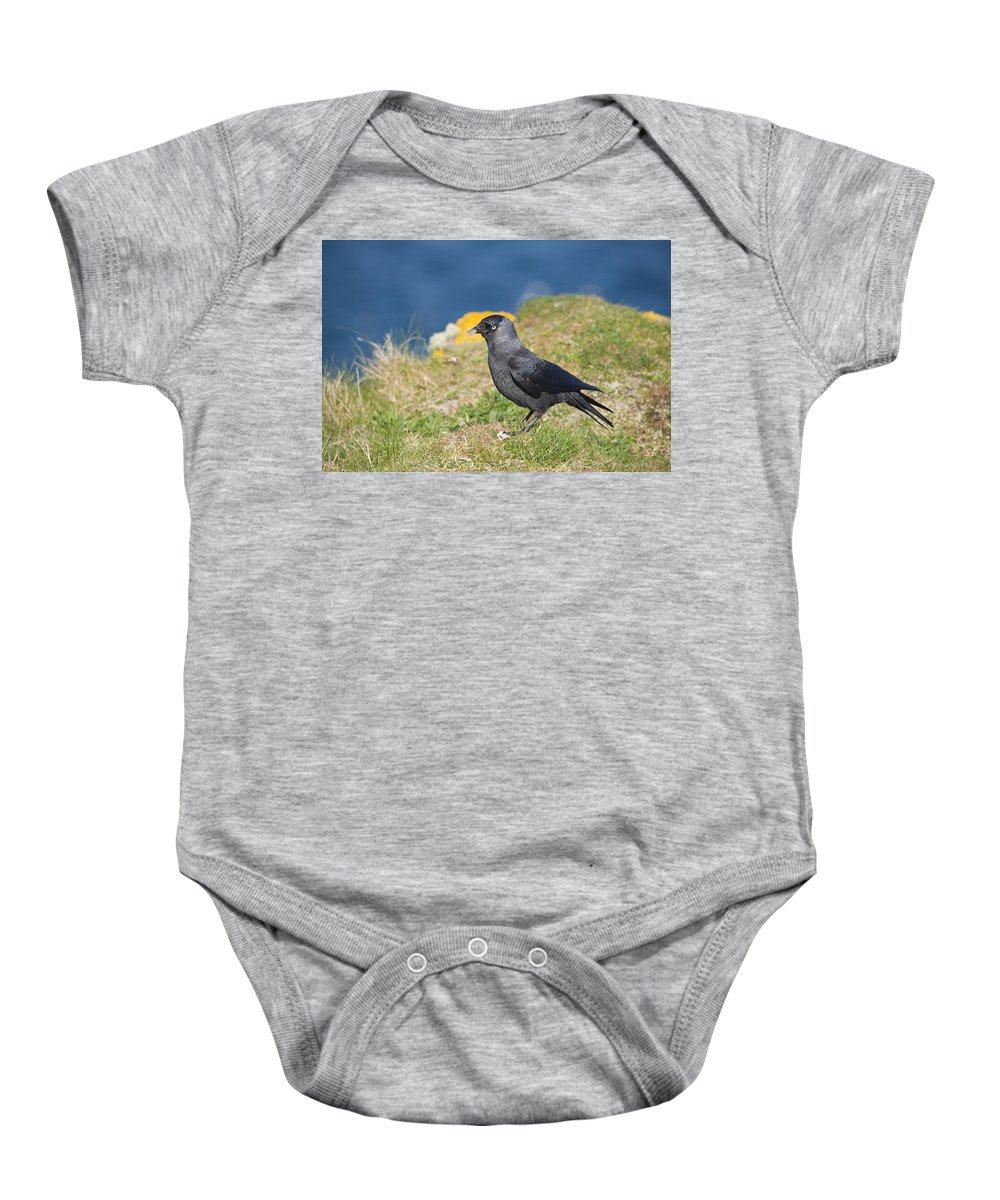 Jackdaw Baby Onesie featuring the photograph Jackdaw Gathering Nesting Materials by Howard Kennedy