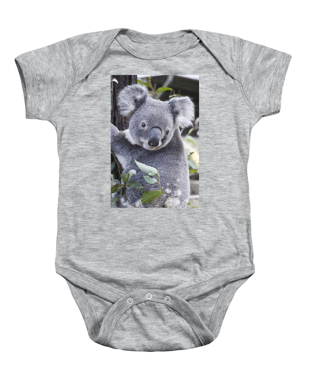 Animals Baby Onesie featuring the photograph Koala In Tree by Paul Hobson