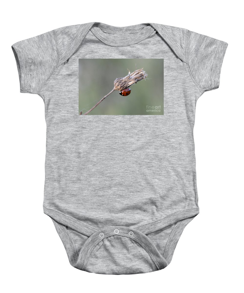 Ladybug Baby Onesie featuring the photograph Ladybug On Dried Thistle by Bob Christopher