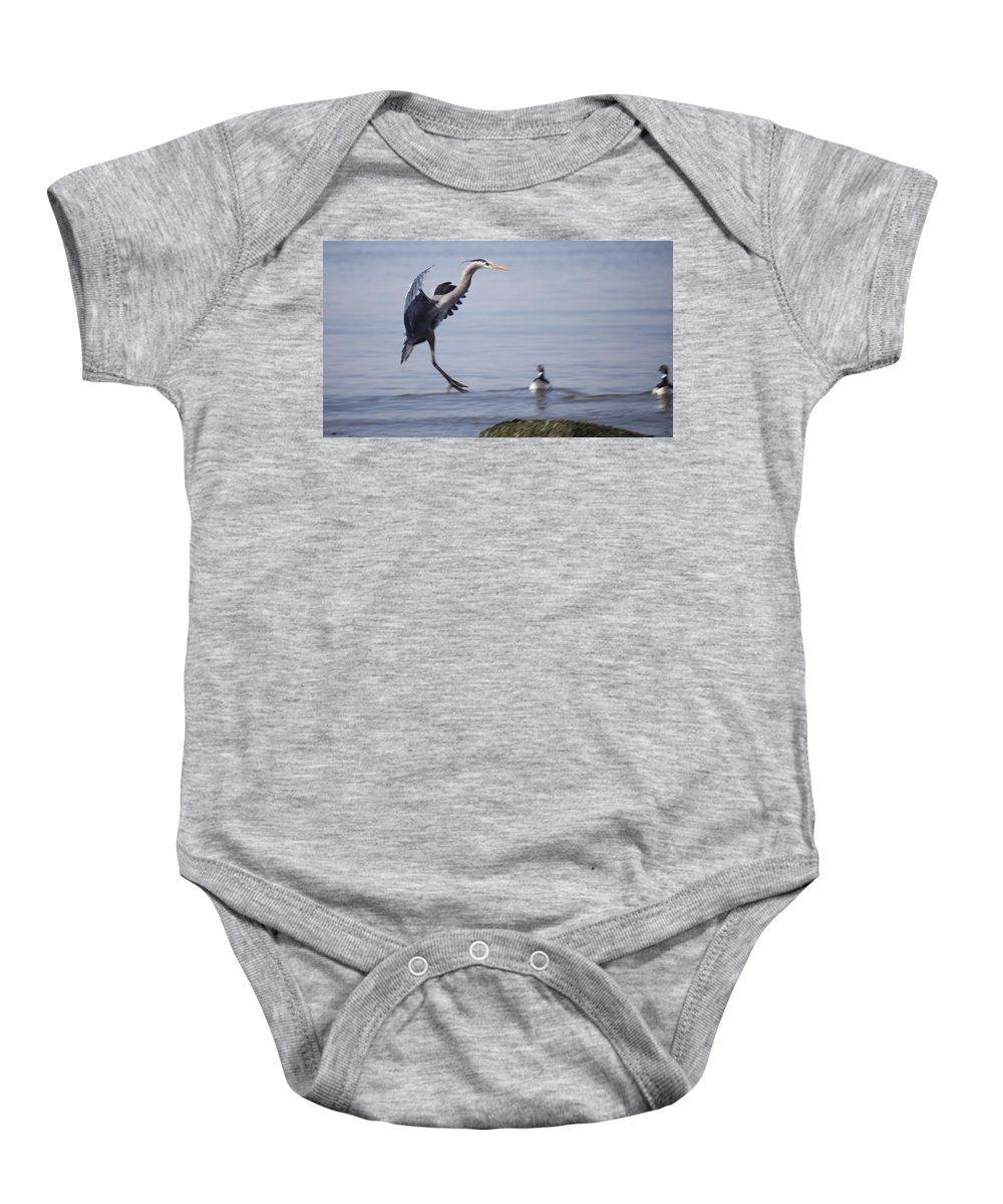 Great Blue Heron Baby Onesie featuring the photograph Landing With Brants by Karen Ulvestad