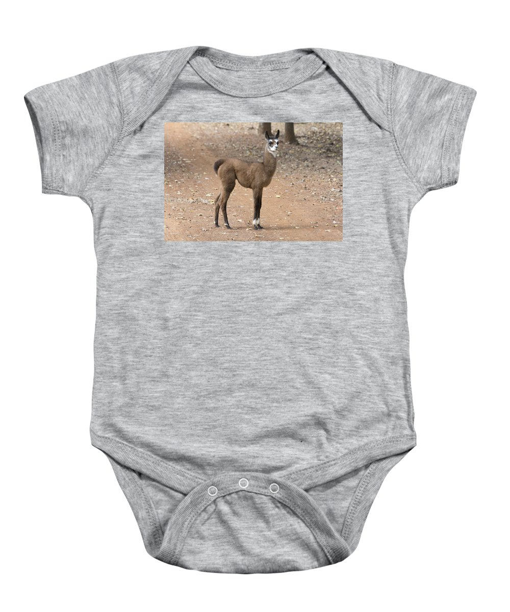 Lama Juvenile Baby Onesie featuring the photograph Little Two-toner by Douglas Barnard