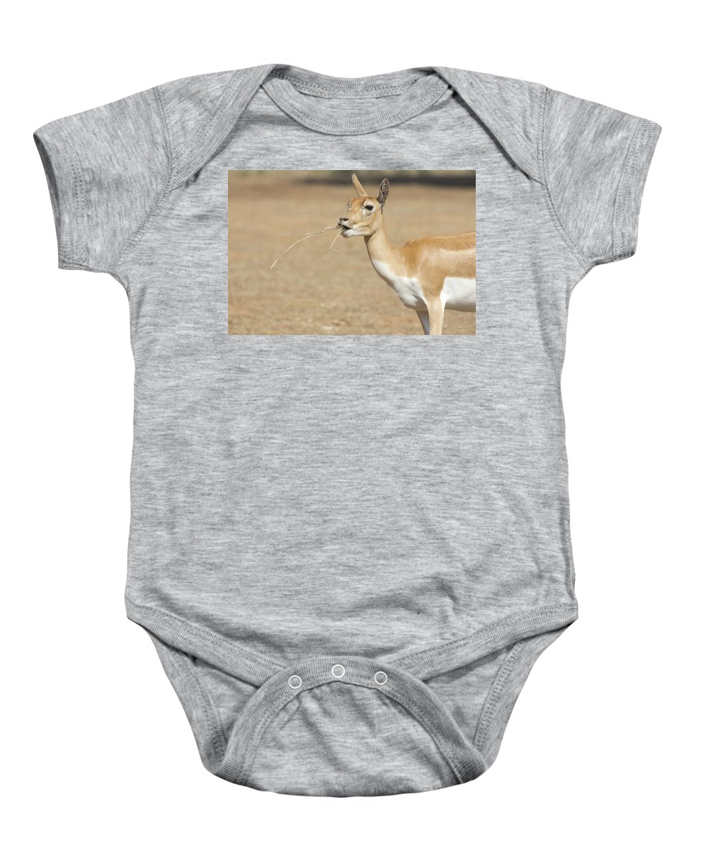Impala Baby Onesie featuring the photograph Lunchtime by Douglas Barnard