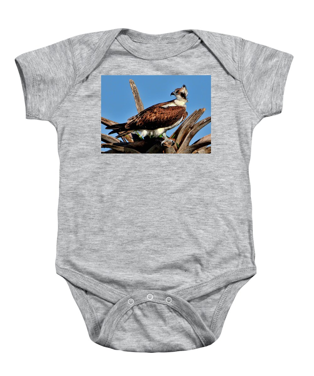 Osprey Baby Onesie featuring the photograph Osprey On A Windy Morning by Bill Dodsworth