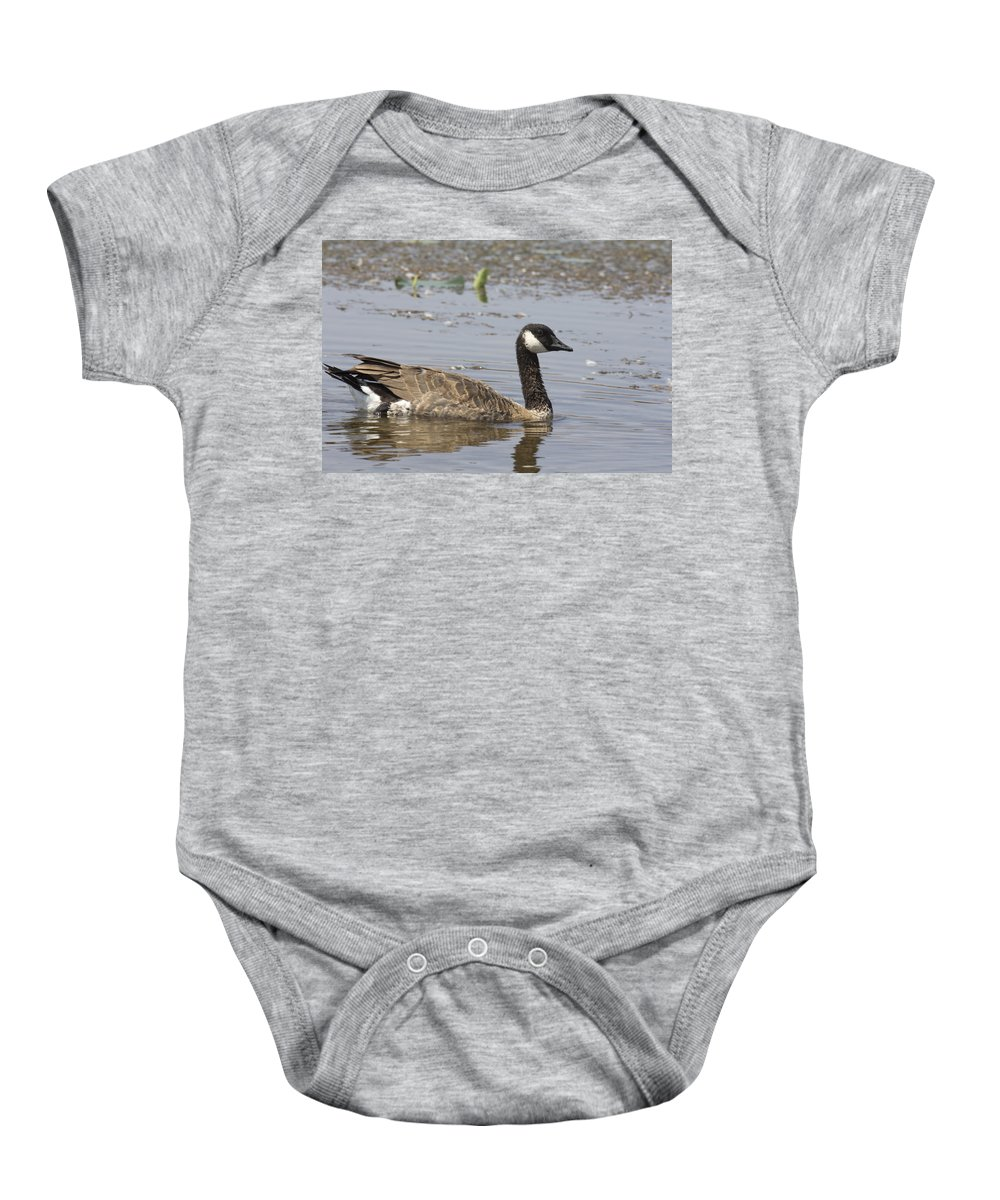 Canadian Goose Baby Onesie featuring the photograph Paddling by Douglas Barnard