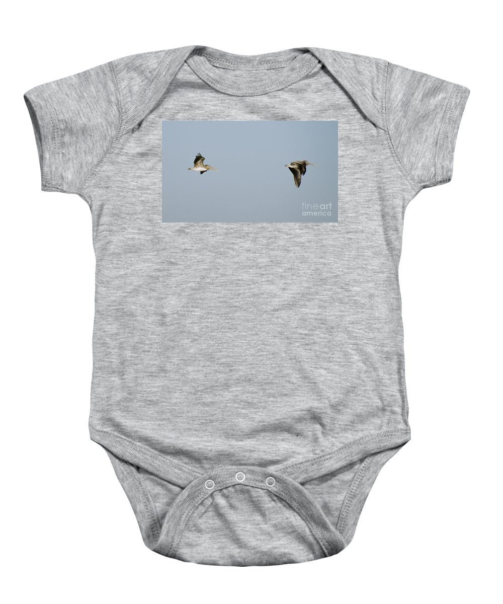 Pelicans Baby Onesie featuring the photograph Pelicans In Flight 2 by Tim Mulina