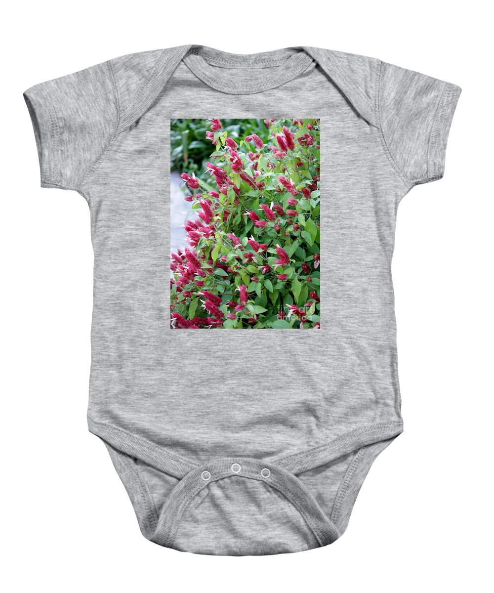 Pink Flowers Baby Onesie featuring the photograph Pink Shrimp Plant by Carol Groenen