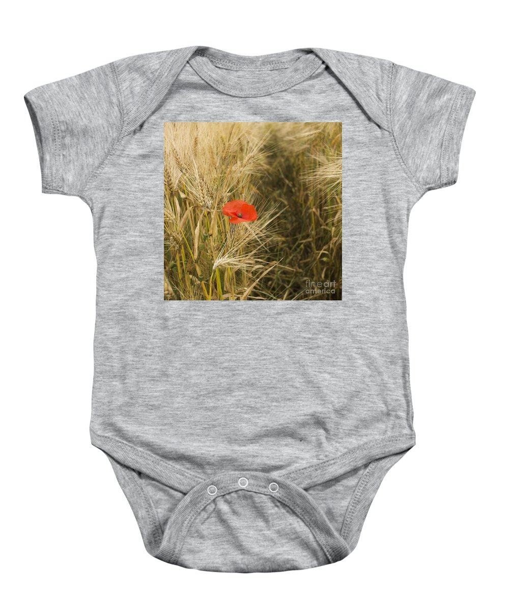 Vulgare Baby Onesie featuring the photograph Poppies In A Field Of Barley  by Bernard Jaubert
