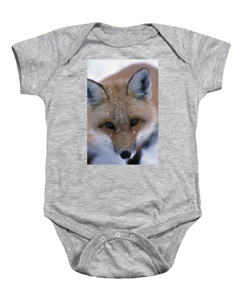 Animal Baby Onesie featuring the photograph Portrait Of Adult Red Fox by Natural Selection Bill Byrne