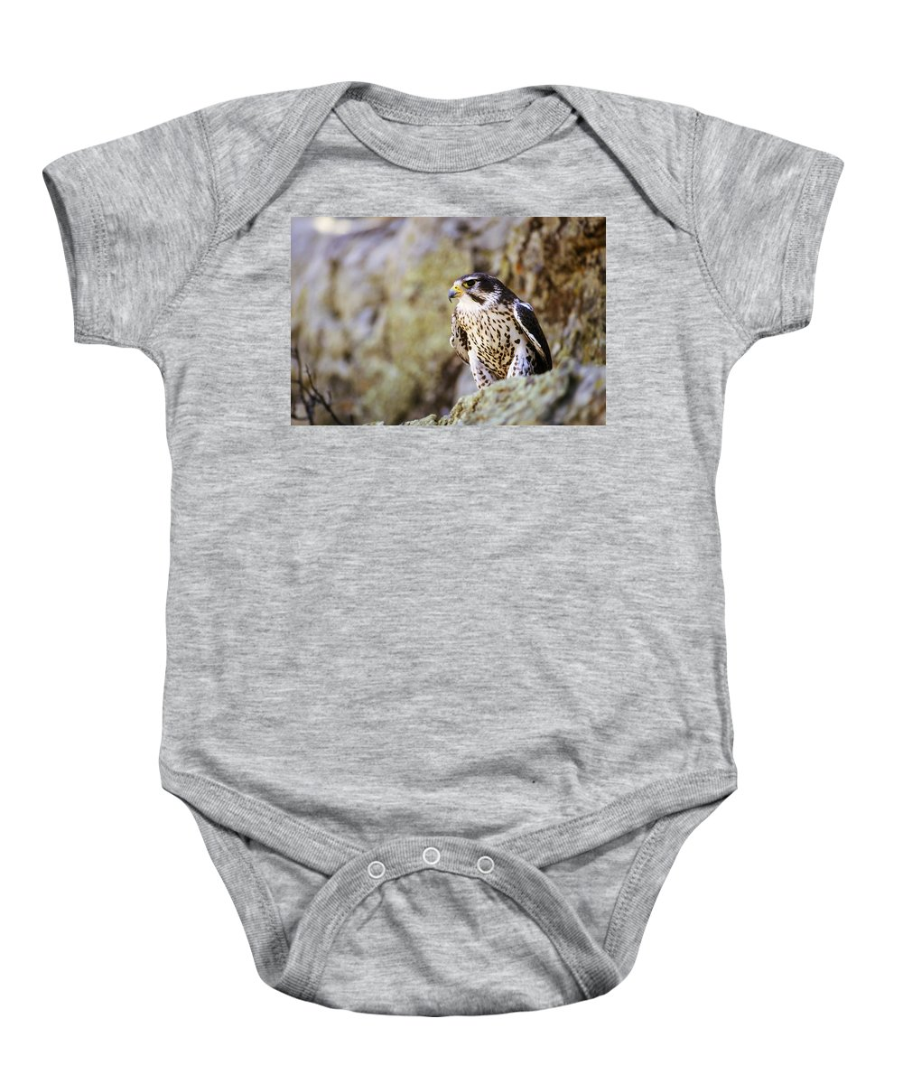 Animal Baby Onesie featuring the photograph Prairie Falcon On Rock Ledge by John Pitcher