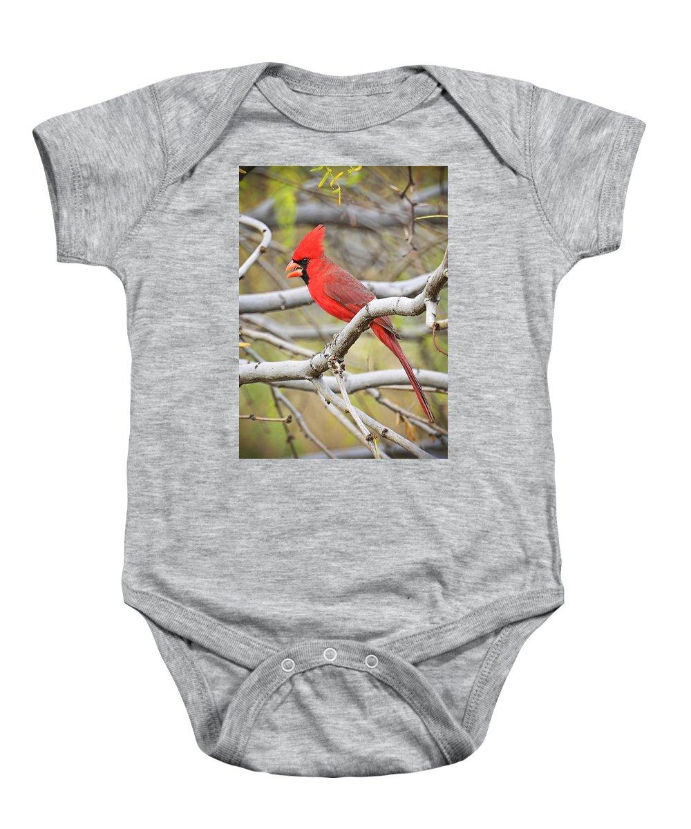 Red Cardinal Baby Onesie featuring the photograph Red Cardinal by Saija Lehtonen