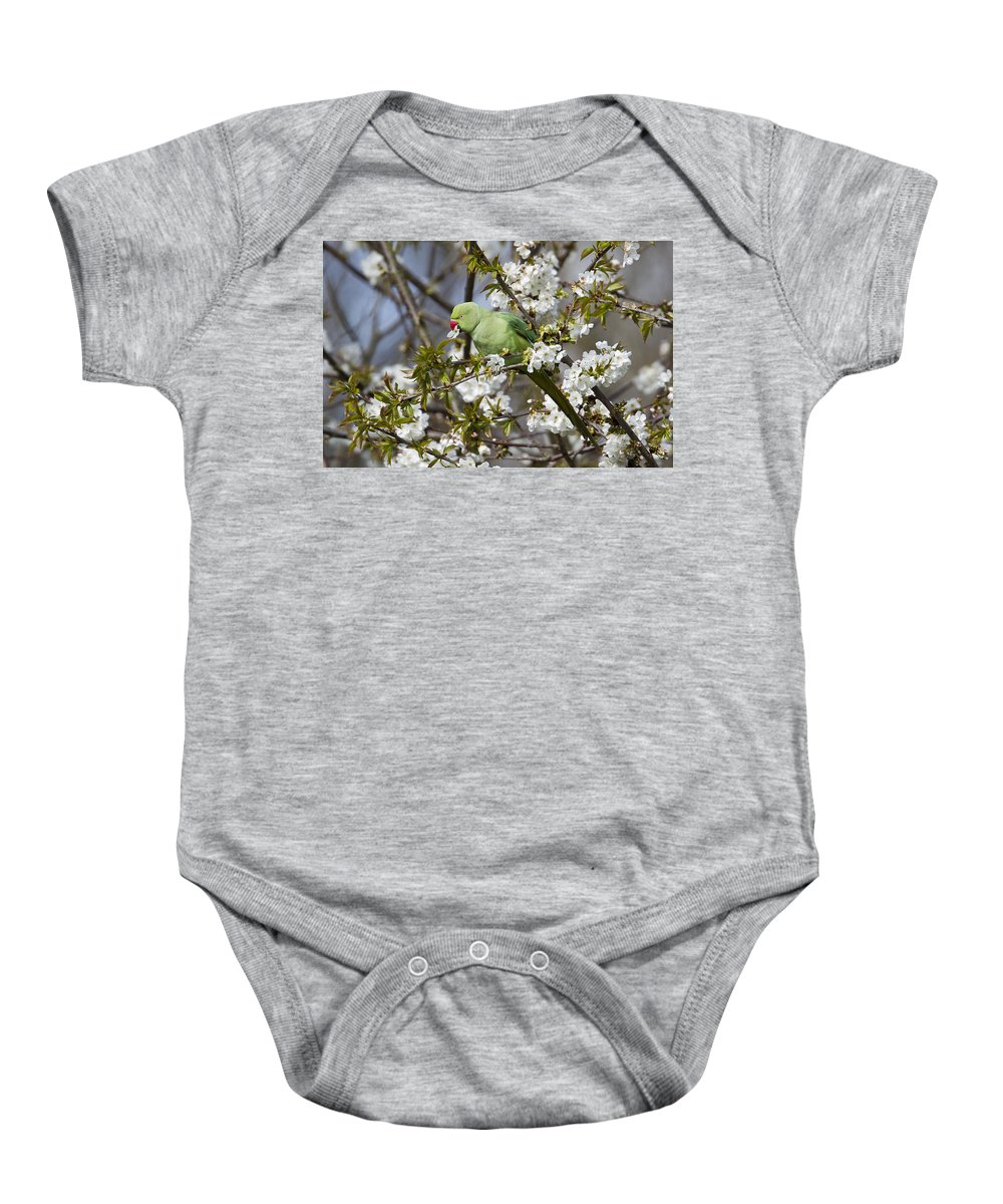 Bird Baby Onesie featuring the photograph Ring-necked Parakeet by Bob Kemp
