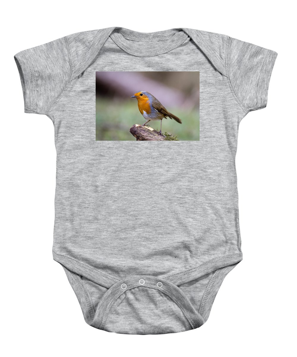 Birds Baby Onesie featuring the photograph Robin by Bob Kemp