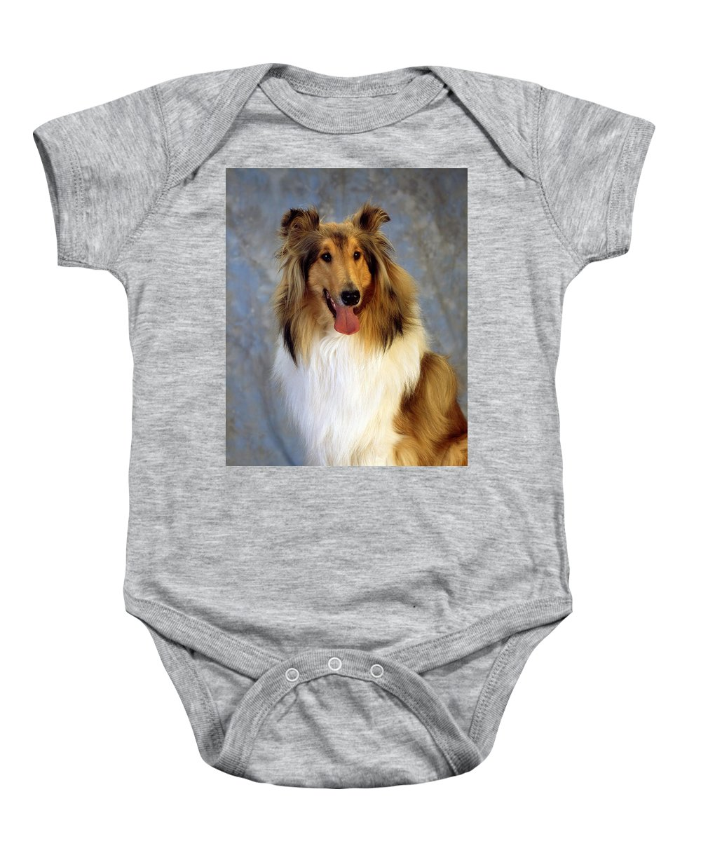 Dogs Baby Onesie featuring the photograph Rough Collie Dog by The Irish Image Collection