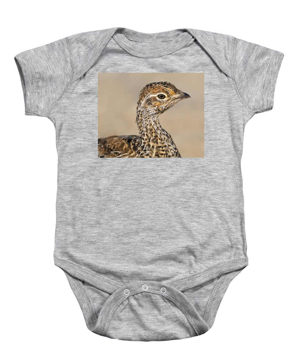 Sharp-tailed Grouse Baby Onesie featuring the photograph Sharp-tailed Grouse by Tony Beck
