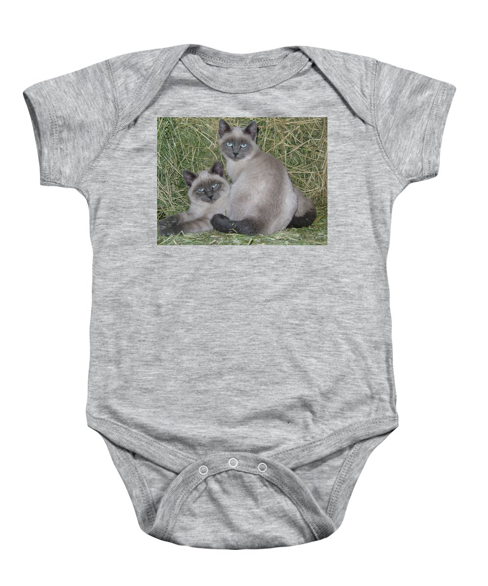 Cat Baby Onesie featuring the photograph Siamese Haystack by Charles and Melisa Morrison