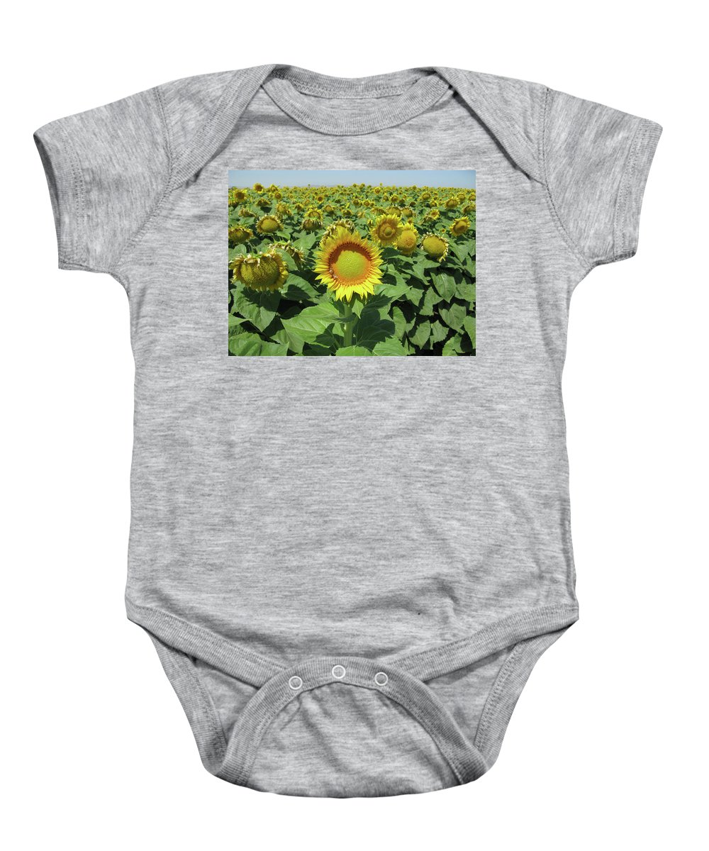 Sunflower Baby Onesie featuring the photograph Sunflower And Honeybees July Two K O Nine II by Carl Deaville