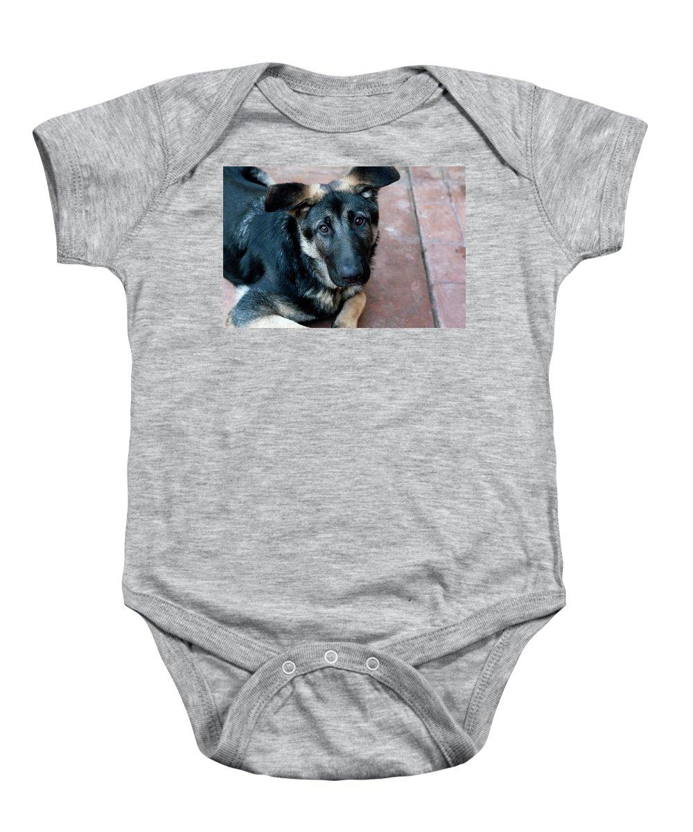 Madrid Baby Onesie featuring the photograph Sweet Spanish Pup by Lorraine Devon Wilke