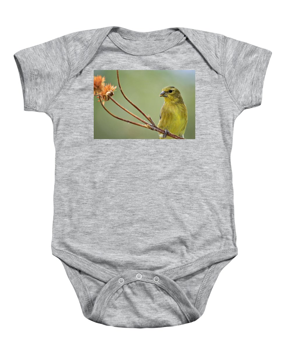 Lesser Gold Finch Baby Onesie featuring the photograph The Finch by Saija Lehtonen
