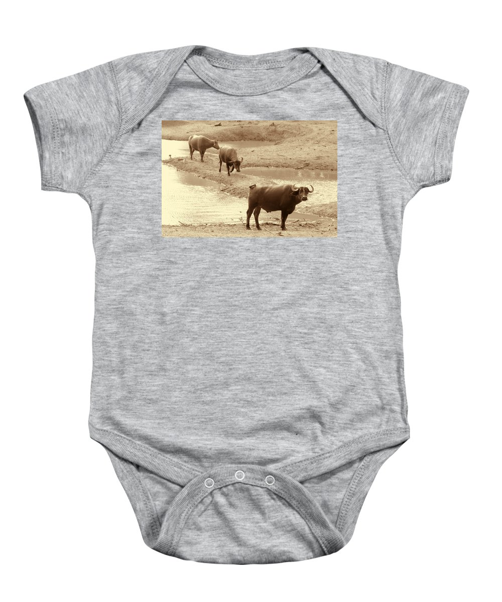 Herd Of Water Buffaloes Baby Onesie featuring the photograph The Herd by Douglas Barnard