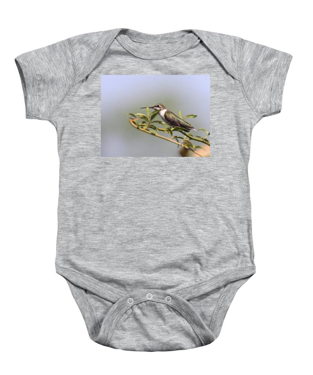 Hummingbird Baby Onesie featuring the photograph Tipping Around by Travis Truelove