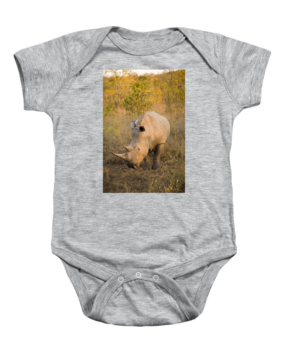 Africa Baby Onesie featuring the photograph White Rhinoceros Ceratotherium Simum by Stuart Westmorland