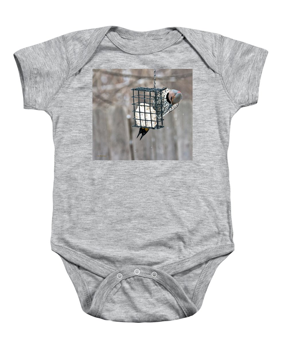 Yellow Shafted Northern Flicker Baby Onesie featuring the photograph Winter Feeding by Edward Peterson