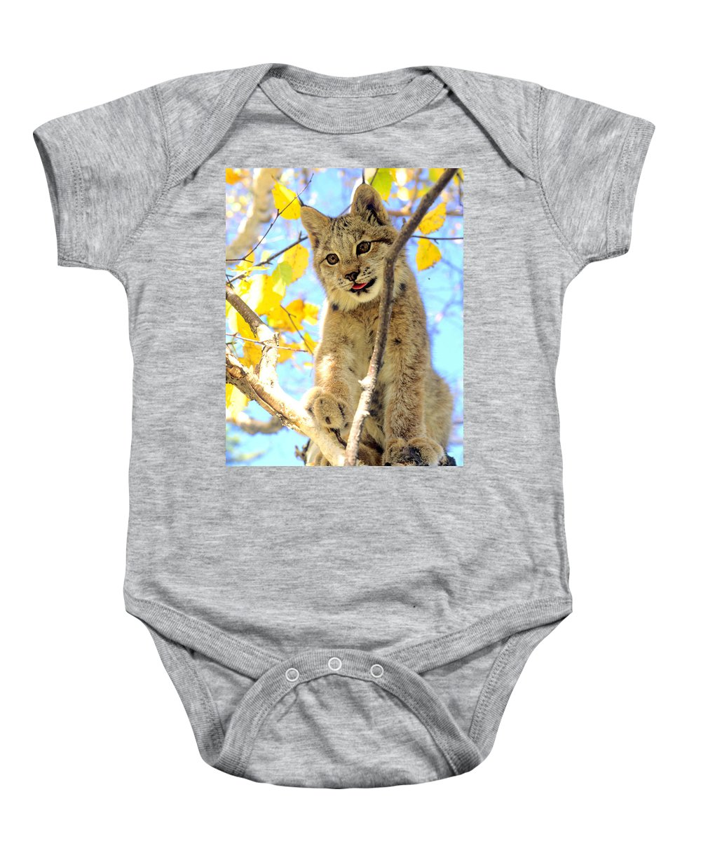 Lynx Baby Onesie featuring the photograph Young Lynx In A Tree by Larry Allan