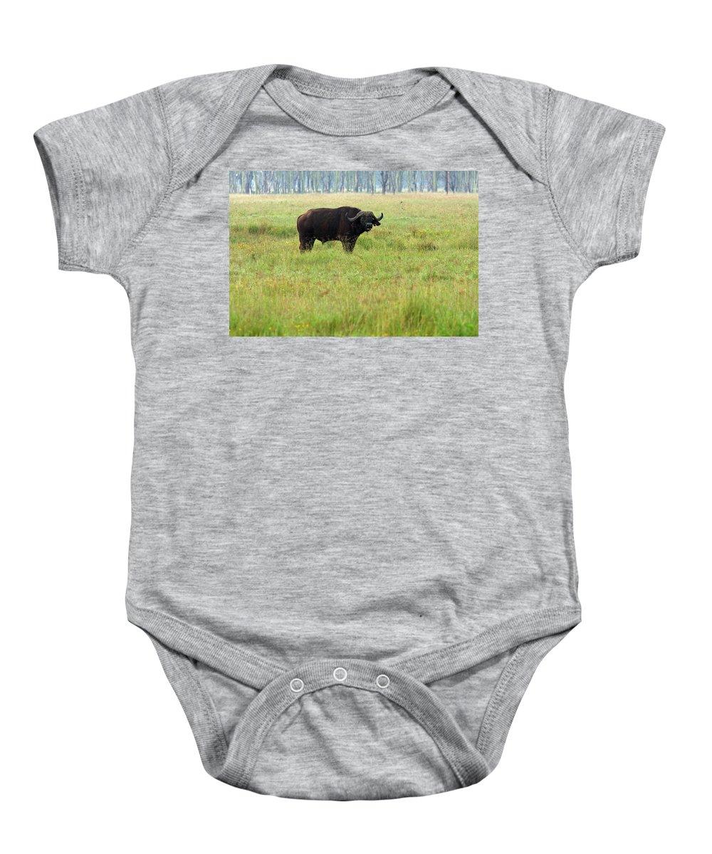 Water Buffalo Baby Onesie featuring the photograph African Buffalo by Aidan Moran