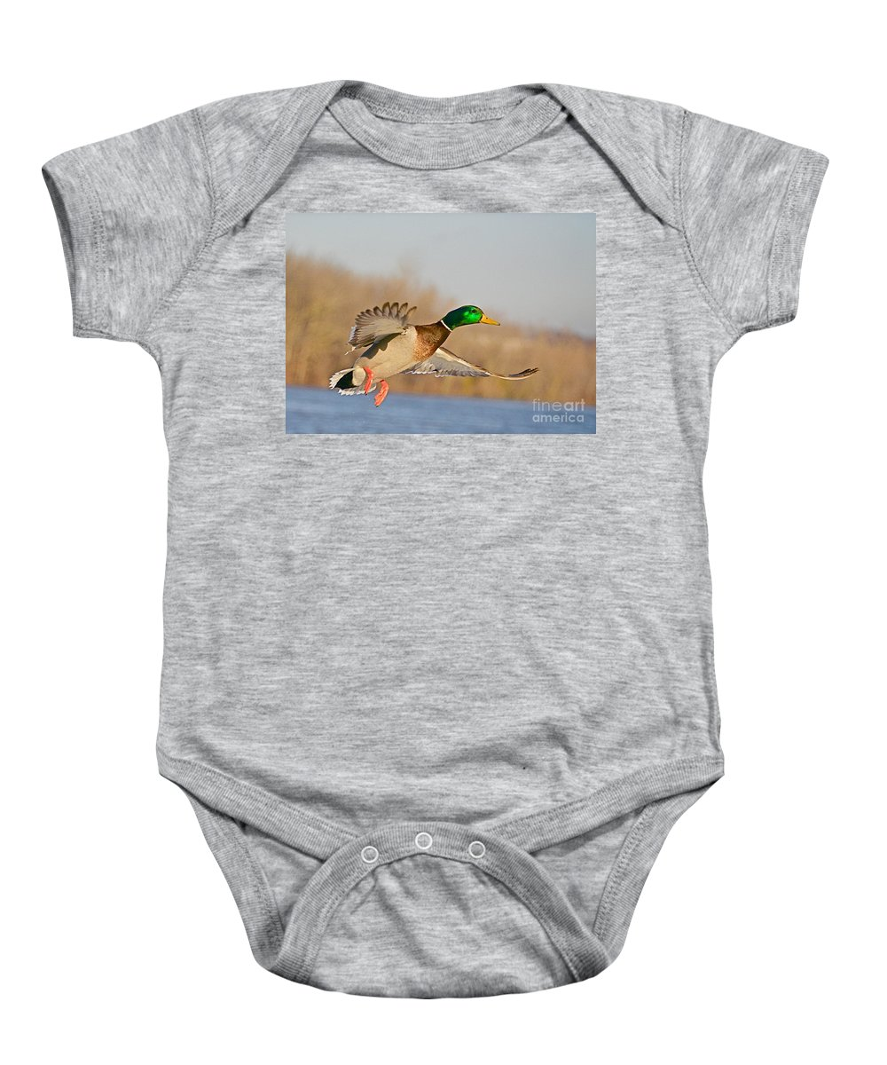 Mallard Baby Onesie featuring the photograph Fly By by Robert Pearson