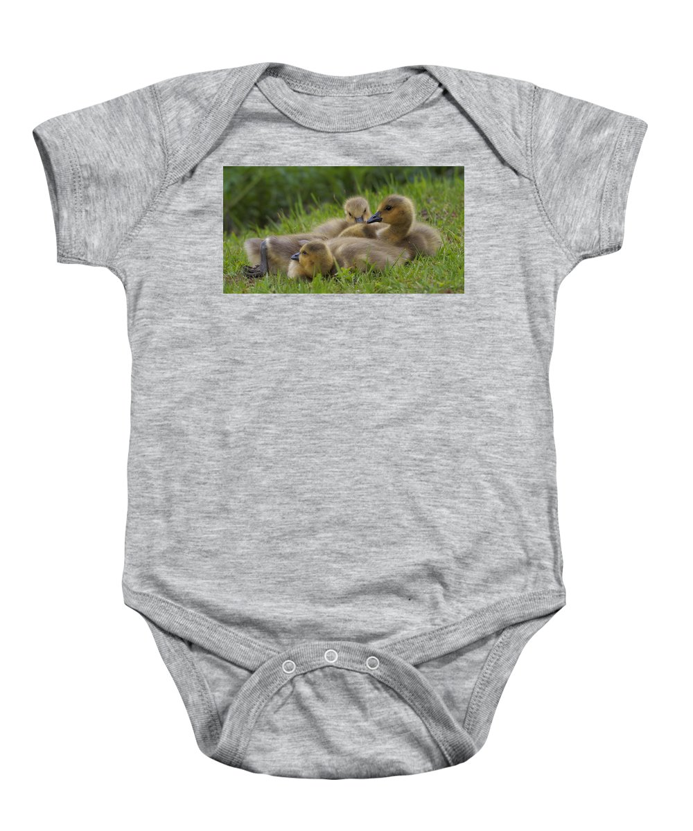 Gosslings Baby Onesie featuring the photograph Goslings by Eye to Eye Xperience