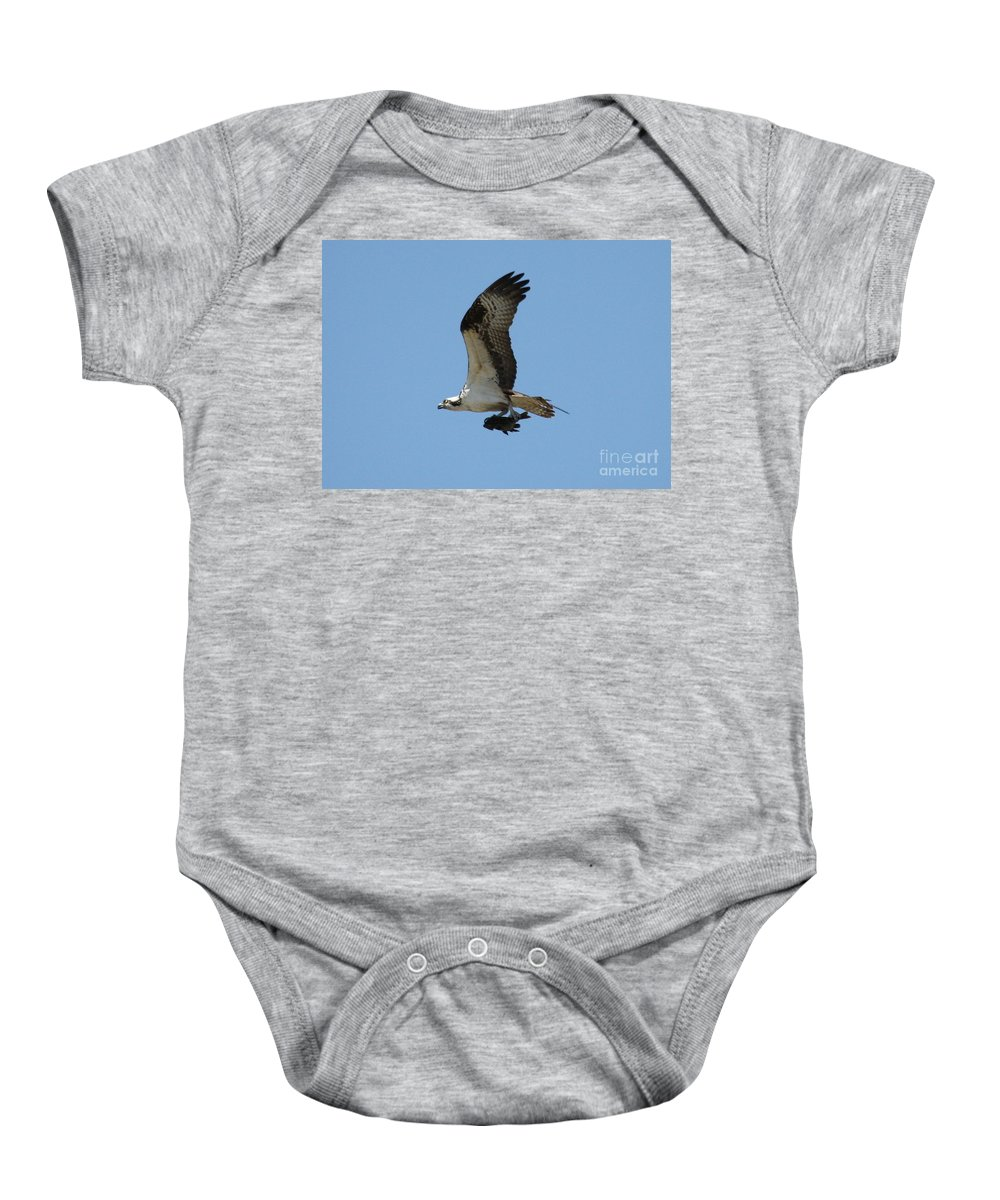 Osprey With Fish Baby Onesie featuring the photograph Osprey With Fish by Carol Groenen