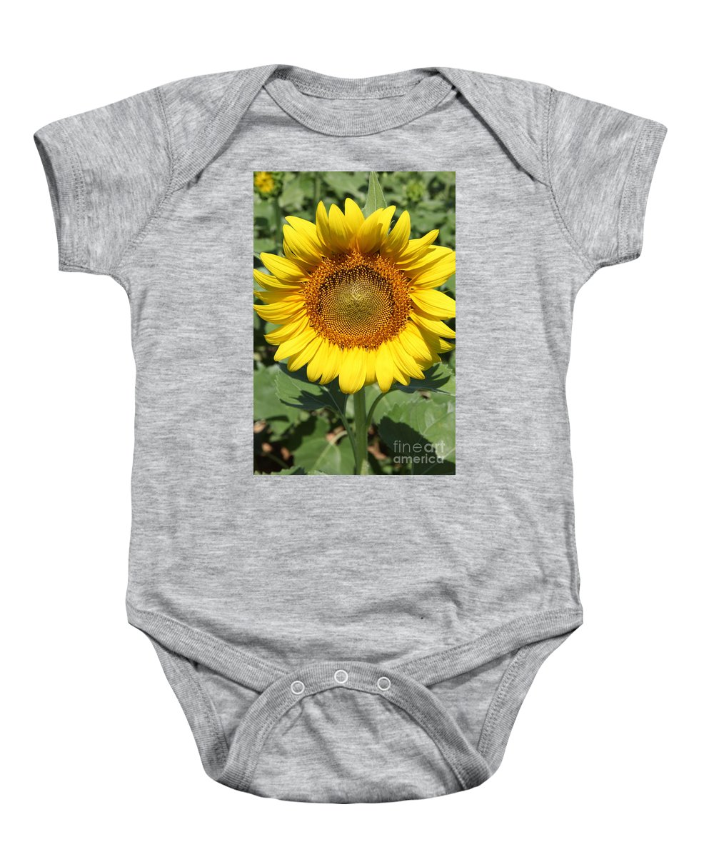 Sunflowers Baby Onesie featuring the photograph Sunflower 09 by Amanda Barcon