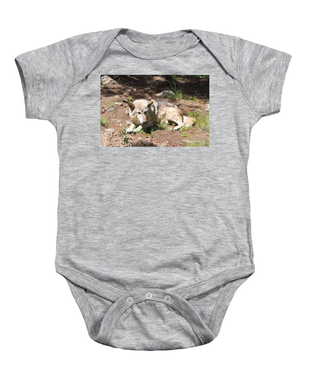 Wolves Baby Onesie featuring the photograph Tour Of Rocky Mountain Wildlife Foundation by Steve Krull