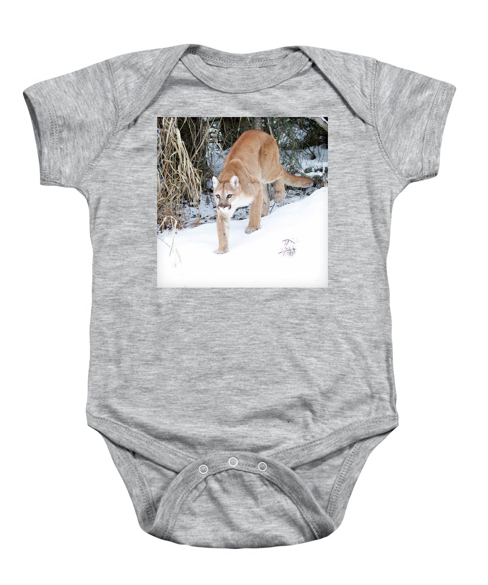 Mountain Lion Baby Onesie featuring the photograph Winter Prowler by Steve McKinzie