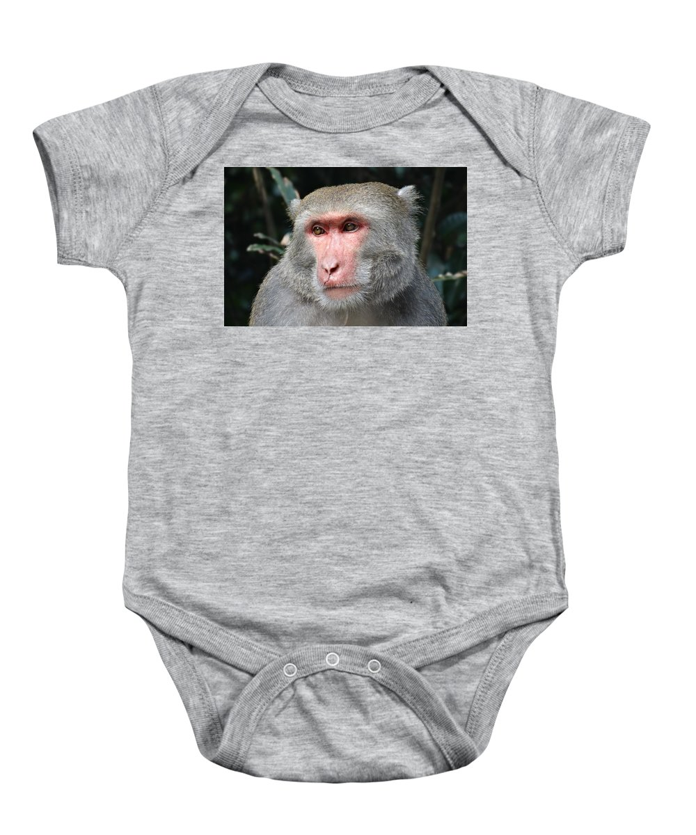Monkey Baby Onesie featuring the photograph Monkey by FL collection