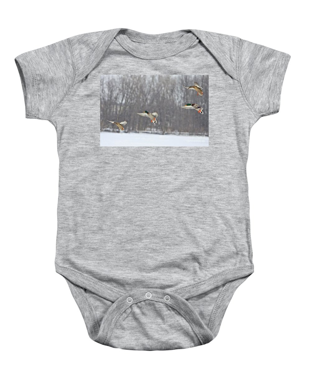 Ducks Baby Onesie featuring the photograph 4 In A Row by Robert Pearson