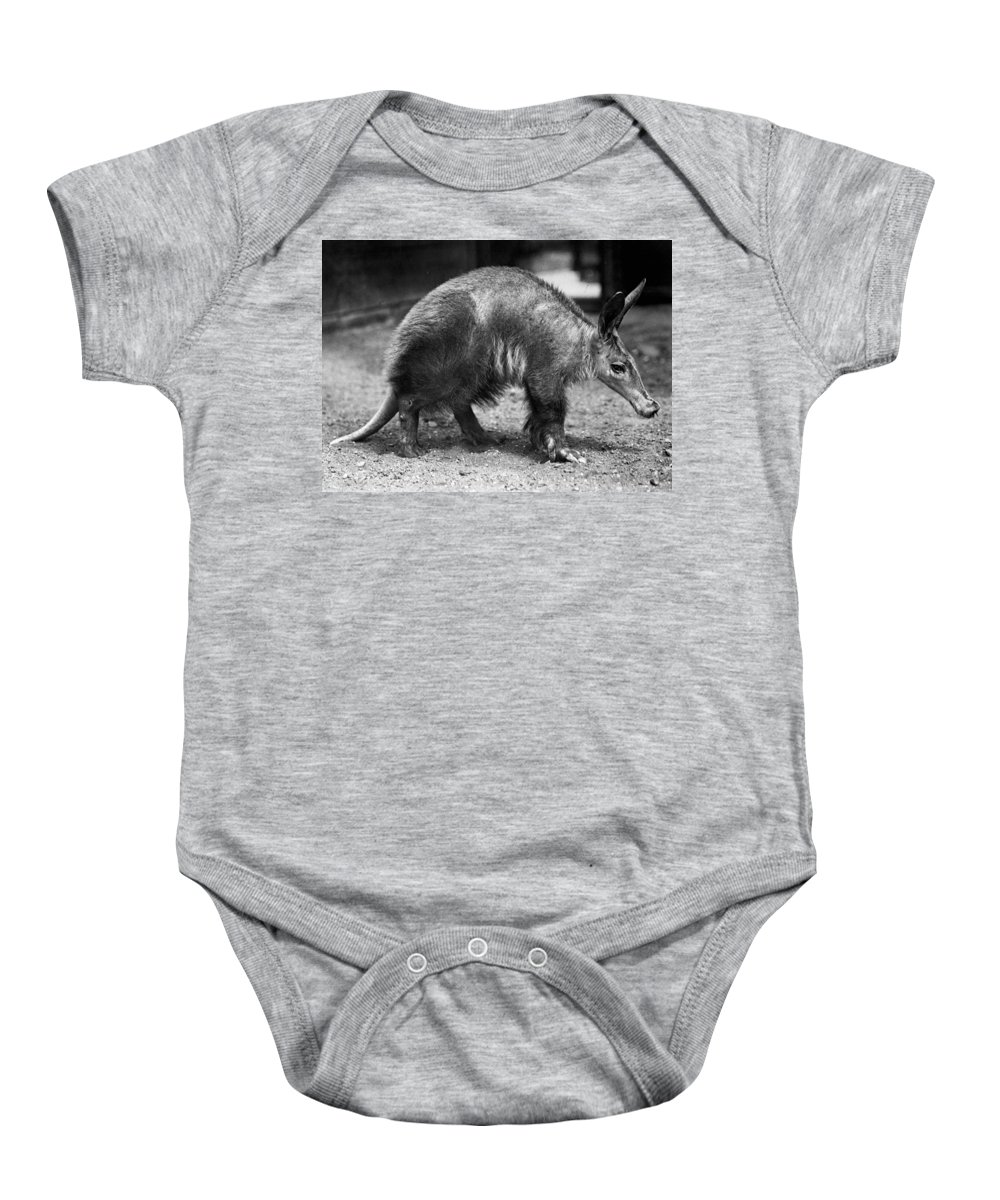 20th Century Baby Onesie featuring the photograph Aardvark by Granger